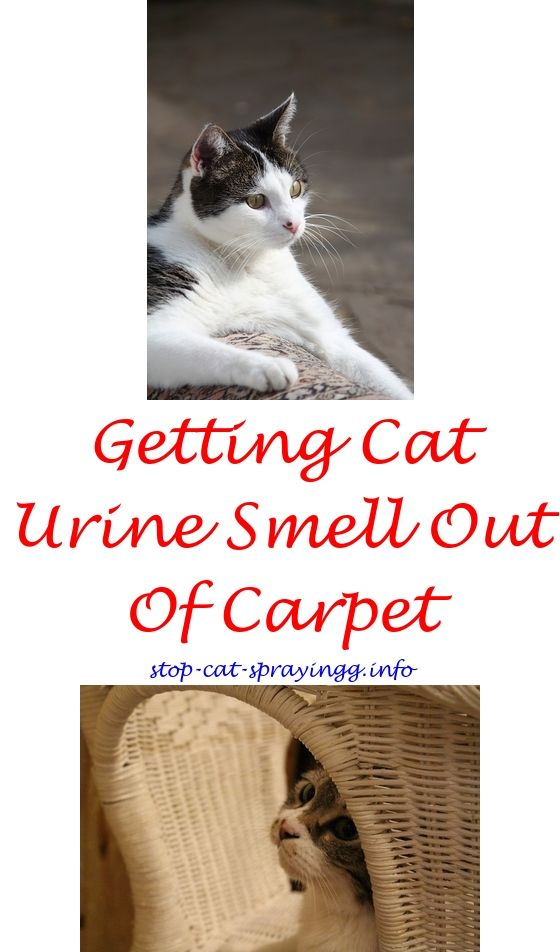 Dog Urine Smell On Leather Couch