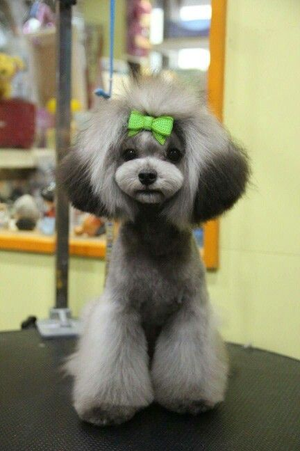 Dog Styling Goods Creative The Art Of Dog Styling