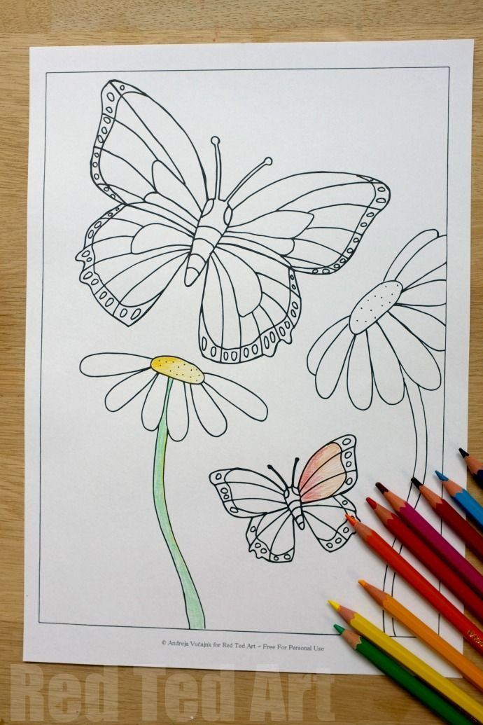 Summer Colouring Pages For Kids Butterflies And Flowers Free