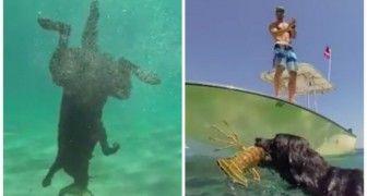 Deze labrador verrast je met een speciale vangst van de dag!
