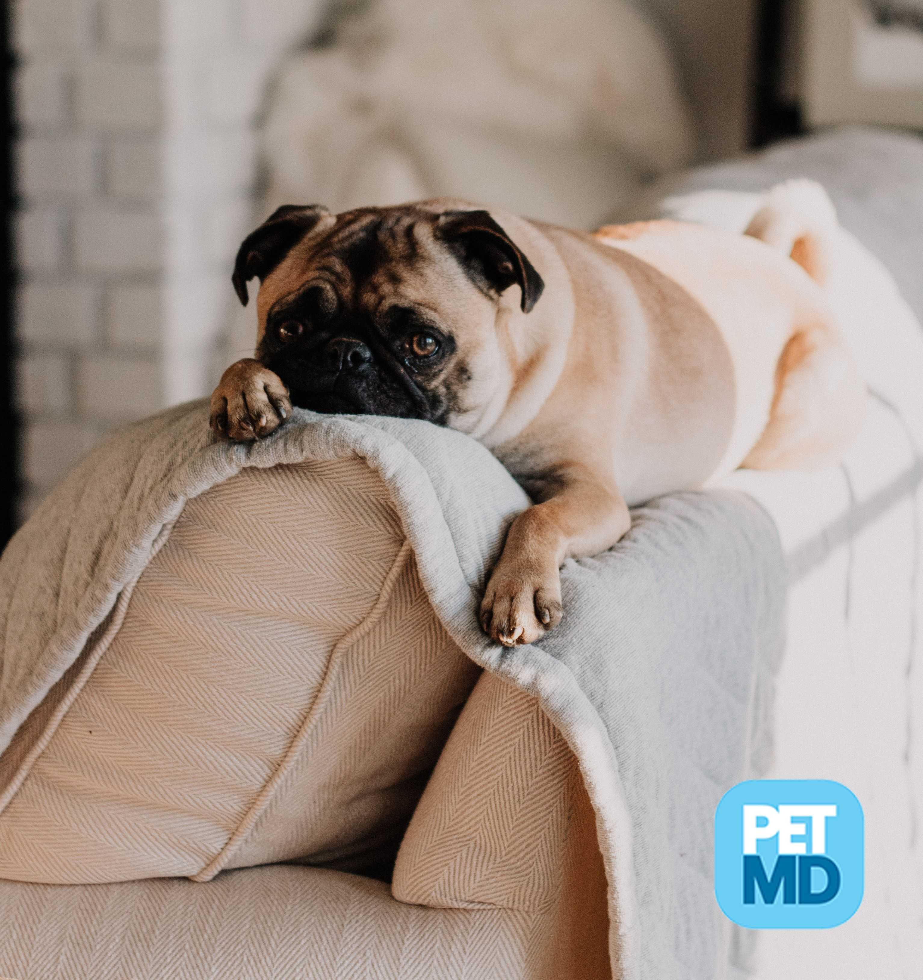 Carbon monoxide poisoning in dogs worms in dogs dogs