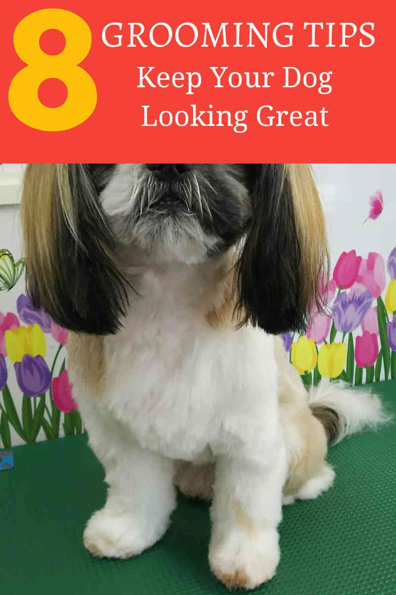 Learning How To Groom A Dog Online And Easy Dogsofinstagram Dog
