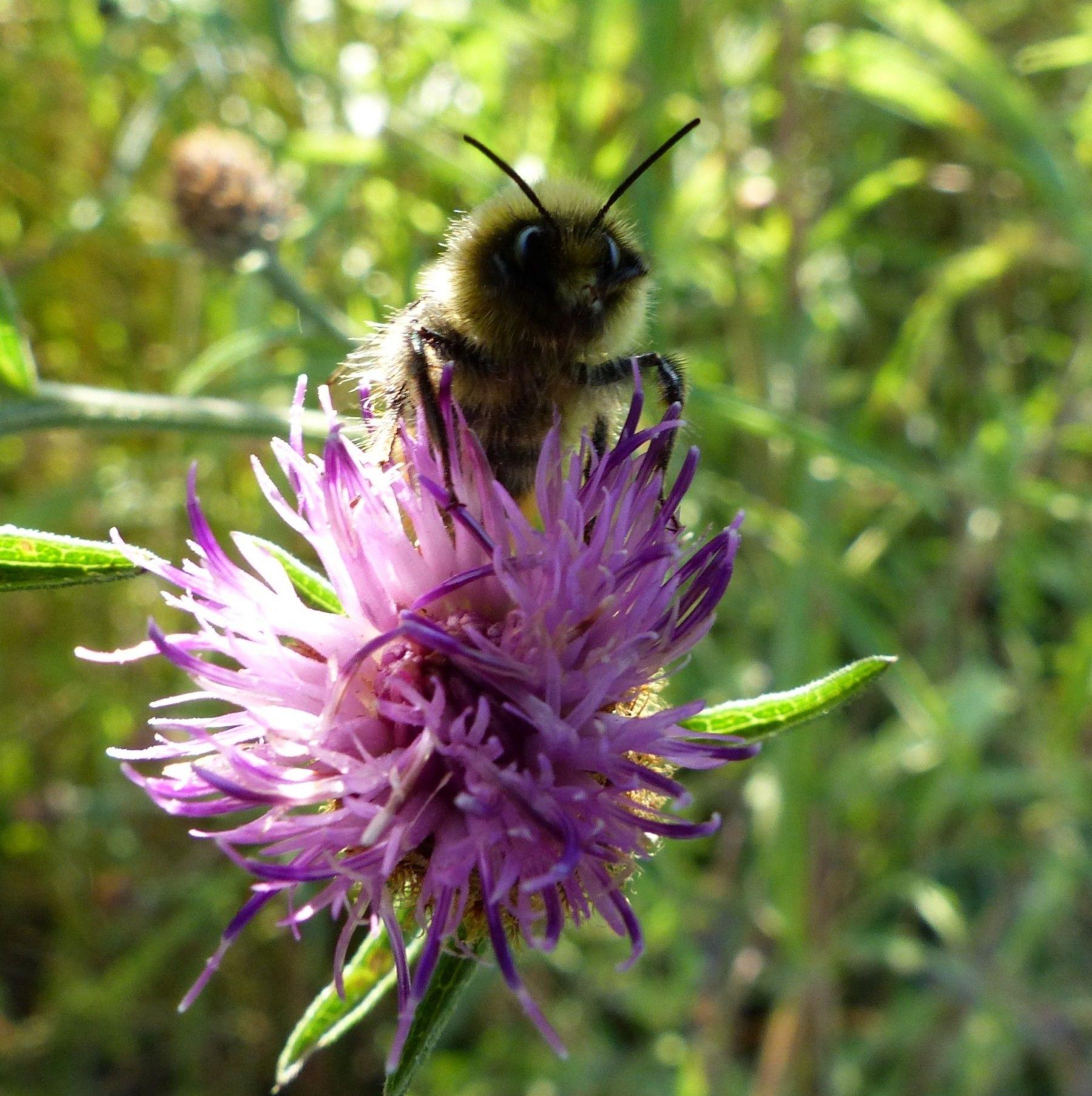 Bee Wildflower Seed Mix Wildflower seeds, Wild flowers