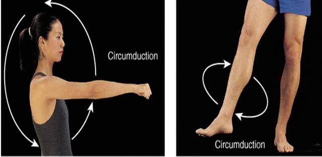Resultado de imagen de circunduccion anatomia | Localización de ...