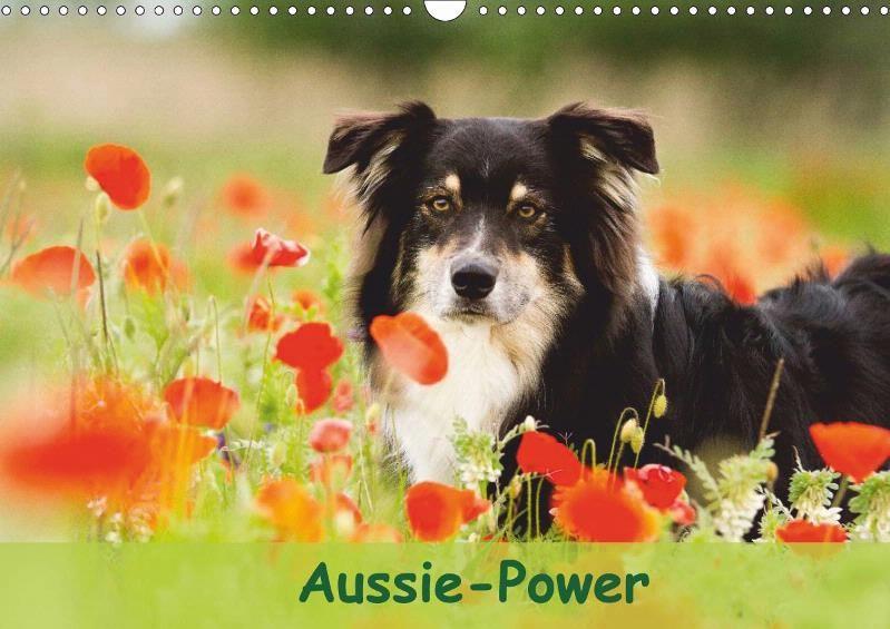 Aussie Power Wandkalender Kalender Australian Shepherd