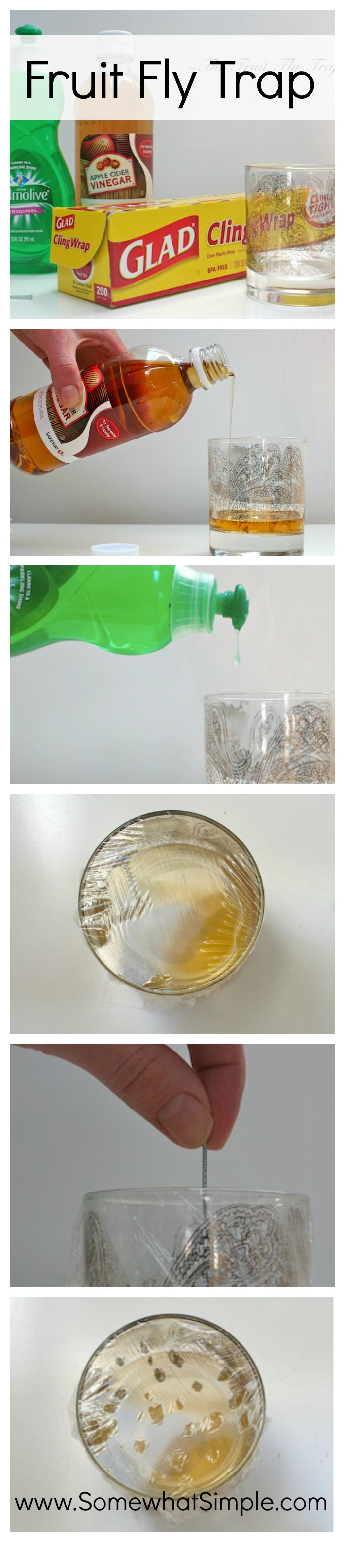 How to get rid of fruit flies and gnats fruit fly trap pinterest