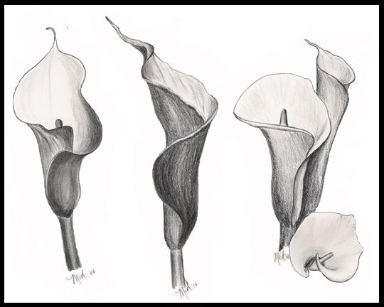 Charcoal Drawing Of Calla Lilies Lilies Drawing Lily Painting Calla Lily Tattoos