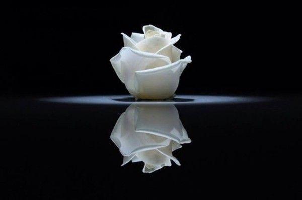 rose blanche sur fond noir dans l eau