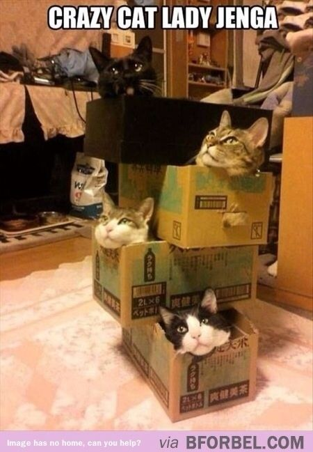 How Many Cats Can You Put In An Empty Box : empty, Empty, Boxes, Never, Long., Crazy, Cats,, Party,, Animals