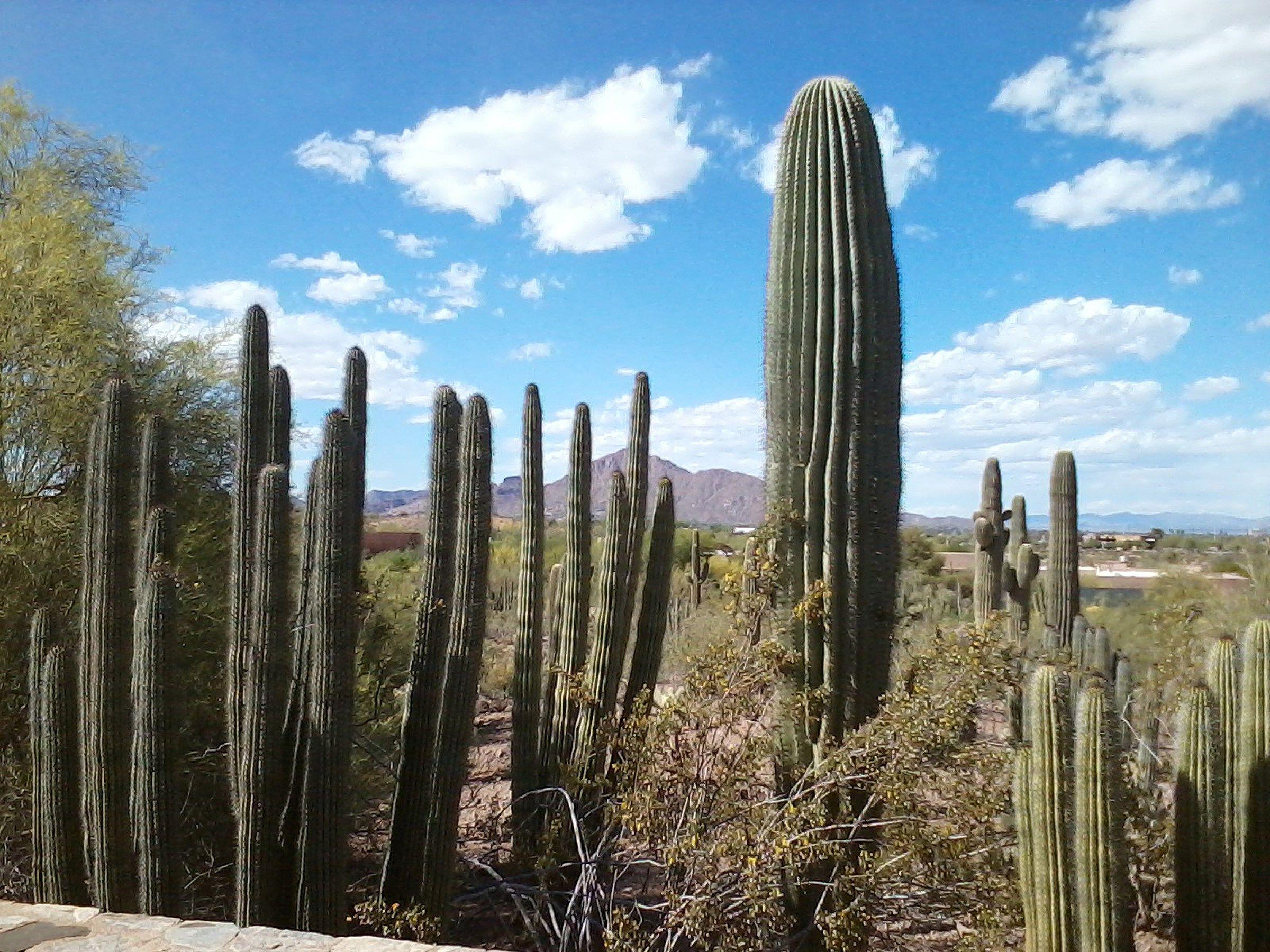 arizona desert wallpaper free hd widescreen (Nita Waite 2400 x 1800)
