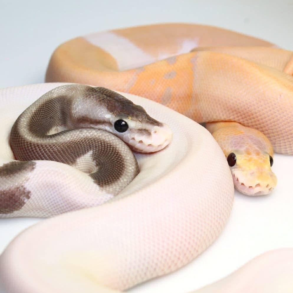 ⇝≫✿xoneaxo✿≪⇜ | ♡a n i m a l s♡ | Pinterest | Serpientes ...
