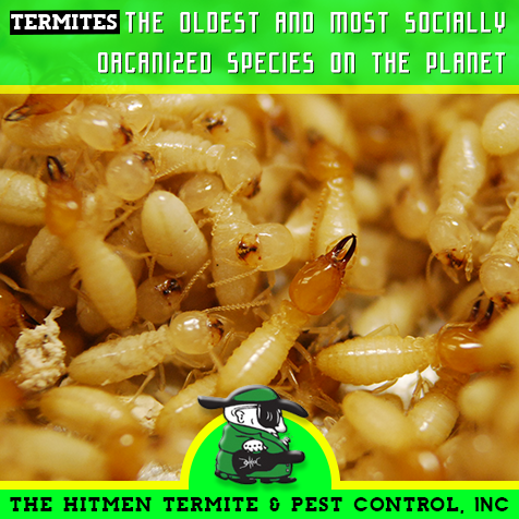 The Oldest Social Civilization On The Planet With An Alliance Greater Than Ants Termites History Pestcontrol Termite Pest Control Termites Pest Control