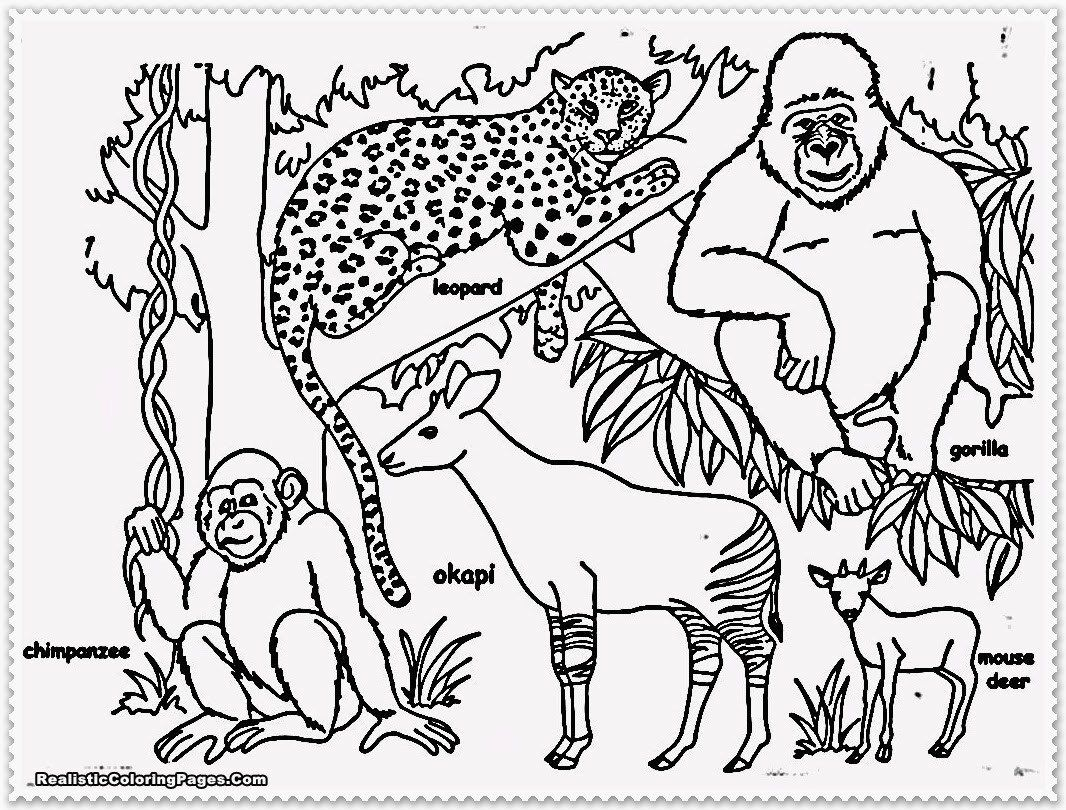 Jungle Animal Coloring Pages Realistic Jungle Animal Coloring
