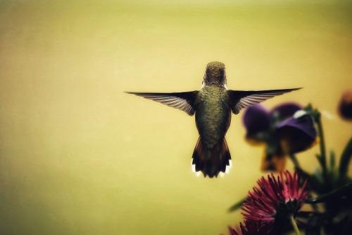 Chobbit Hobbit S Nature Corner Tiny Wings Dog Shower Amazing Photography Lilac