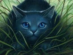 Bluestar Warrior Cats Warrior Cats Series Cat Art