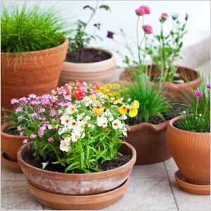 Springtime decor plants gardens and container gardening springtime decor flowers gardenpotted mightylinksfo