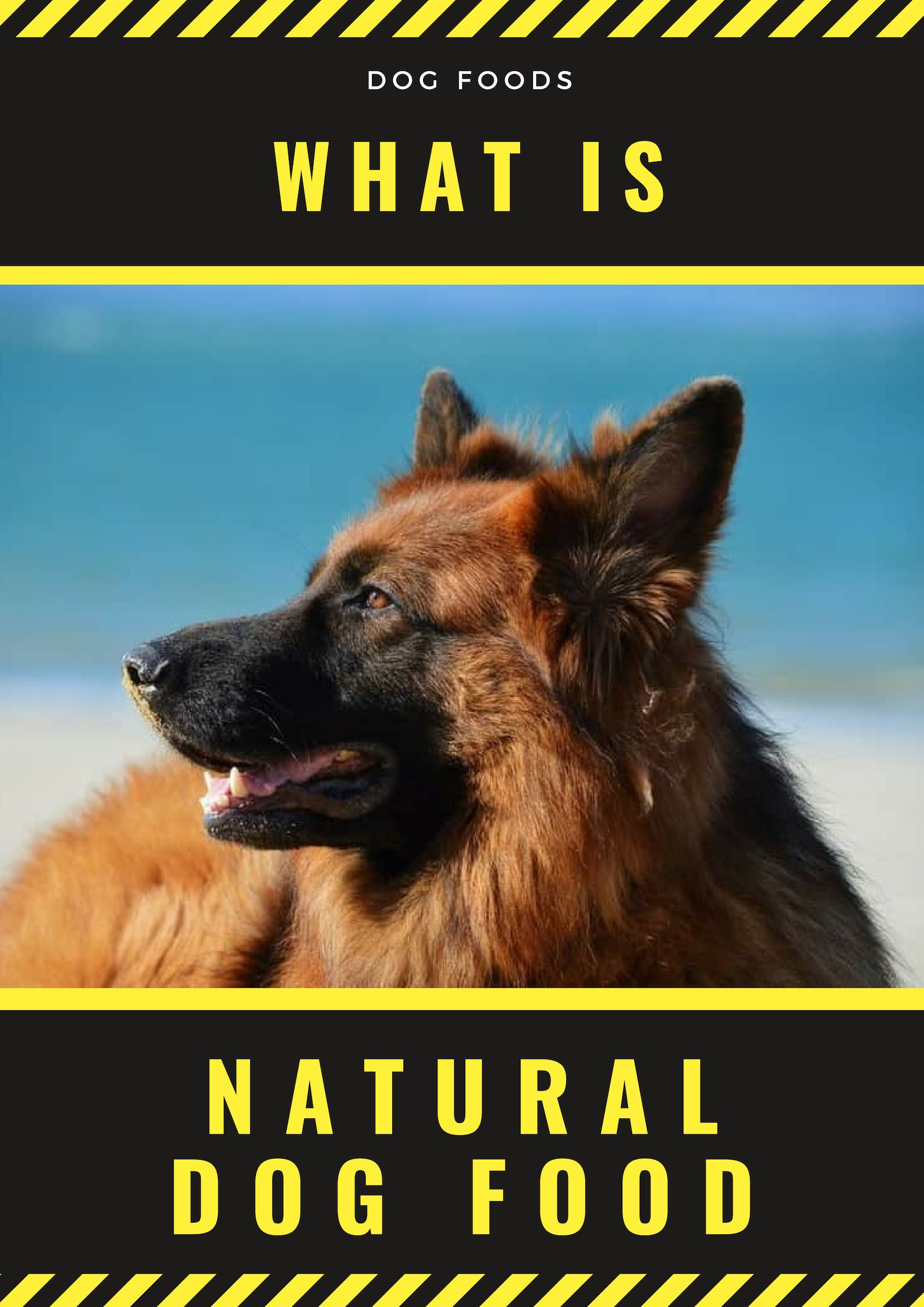 As You Can See Feeding Dogs With Natural Dog Food May Not Be