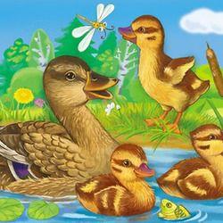 Утка и утята in 2020   Duck art, Bird illustration, Easy ...