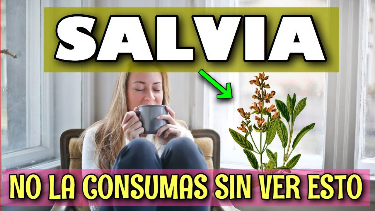 Salvias Para Que Sirve 10 Beneficios Genial Salvia