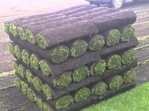 Pin On Growing Grass Turf Farms Sod Farms