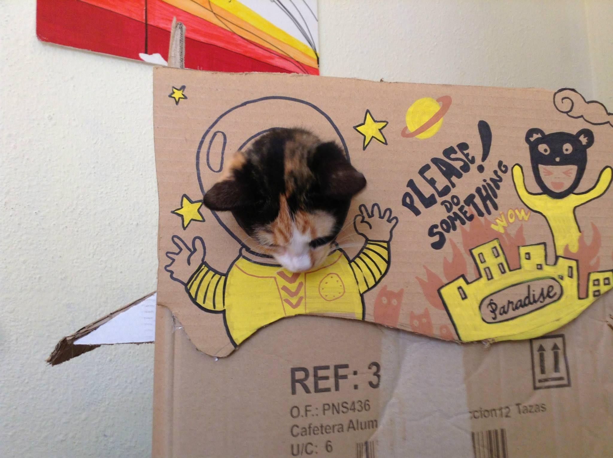 Paca's Cardboard House
