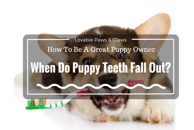 How To Be A Great Puppy Owner When Do Puppy Teeth Fall Out Doghubs Community Puppy Owner Puppies New Puppy