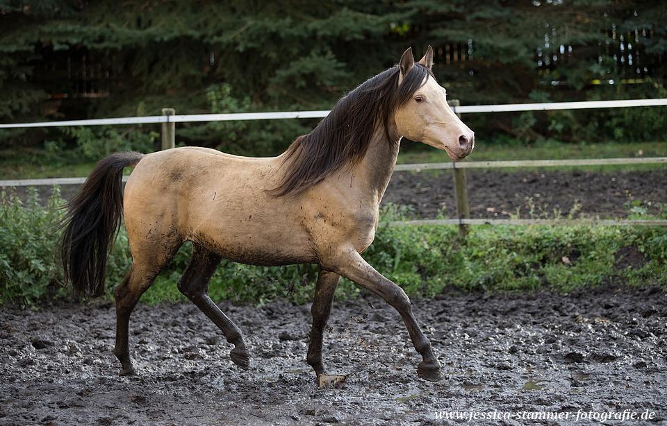 Pin Von Rondraw Studio Auf Pretty Horses Pferde