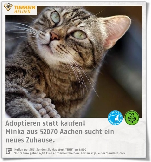 Minka Wurde Wegen Uberforderung Im Tierheim Aachen Abgegeben Https Www Tierheimhelden De Katze Tierheim Aachen Ehk Getigert Mink Tierheim Tiere Susse Katzen