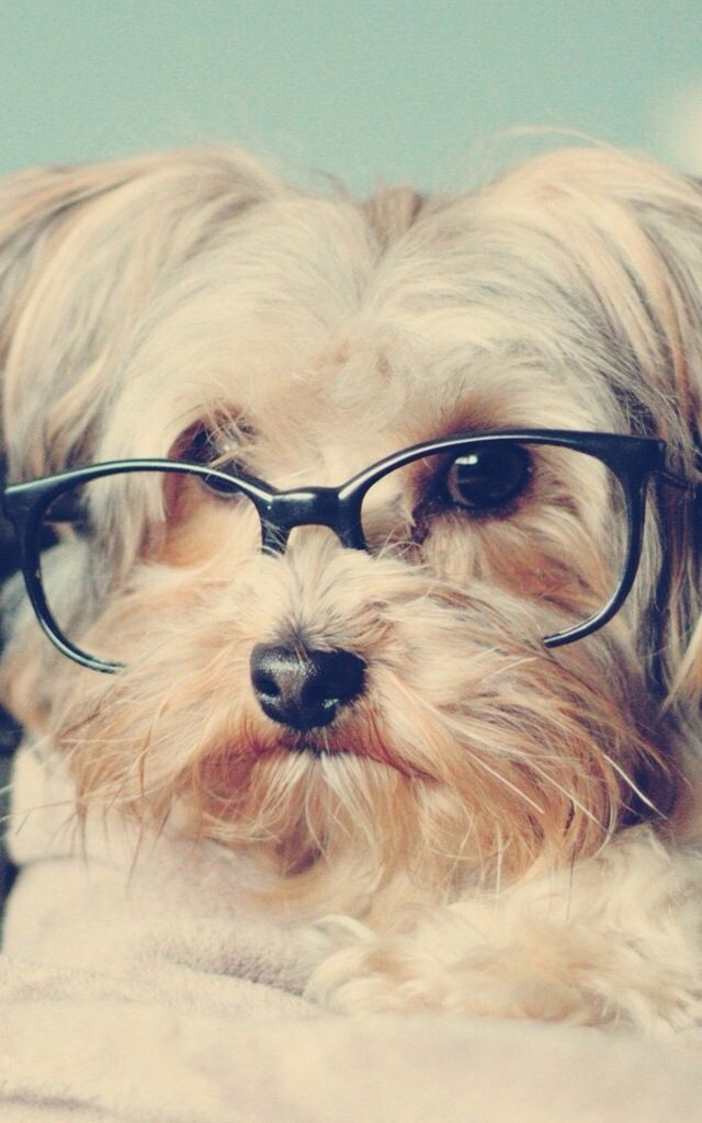 Hipster dog. #EastSideMojo