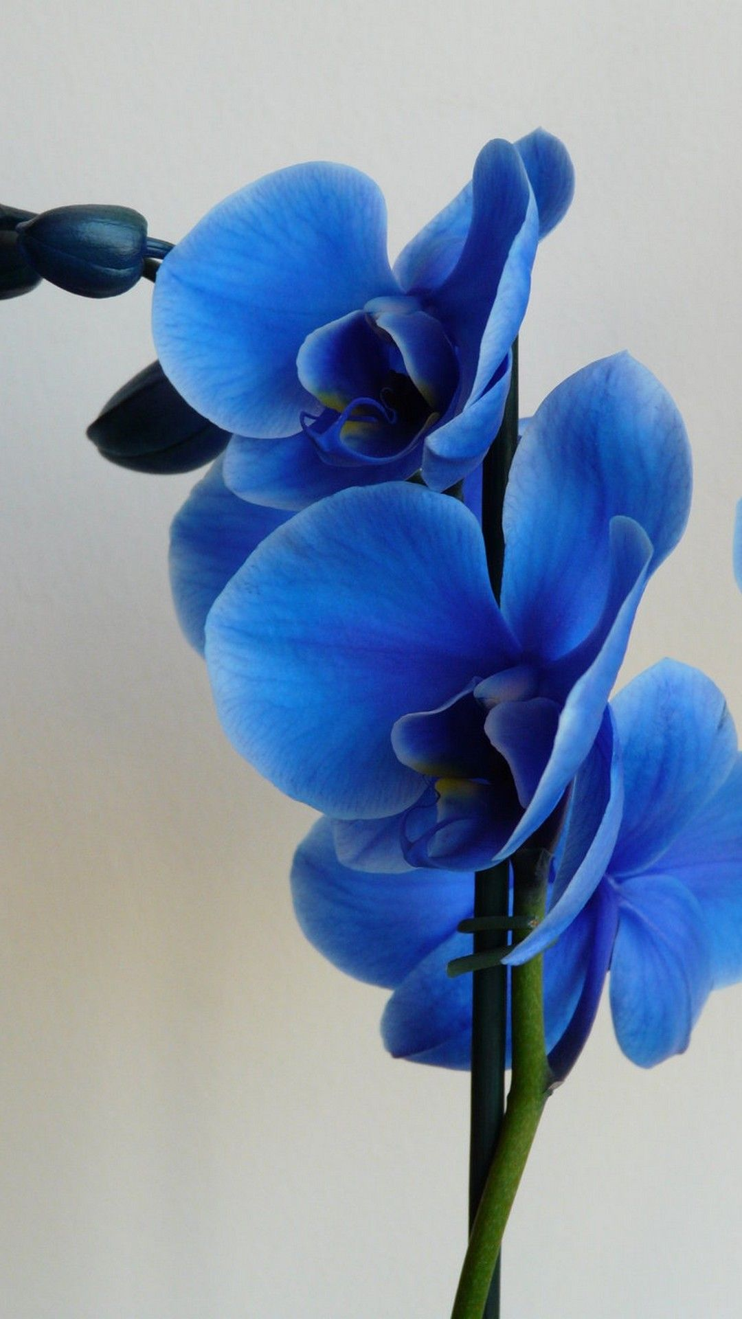 Images of hd wallpapers for android flower