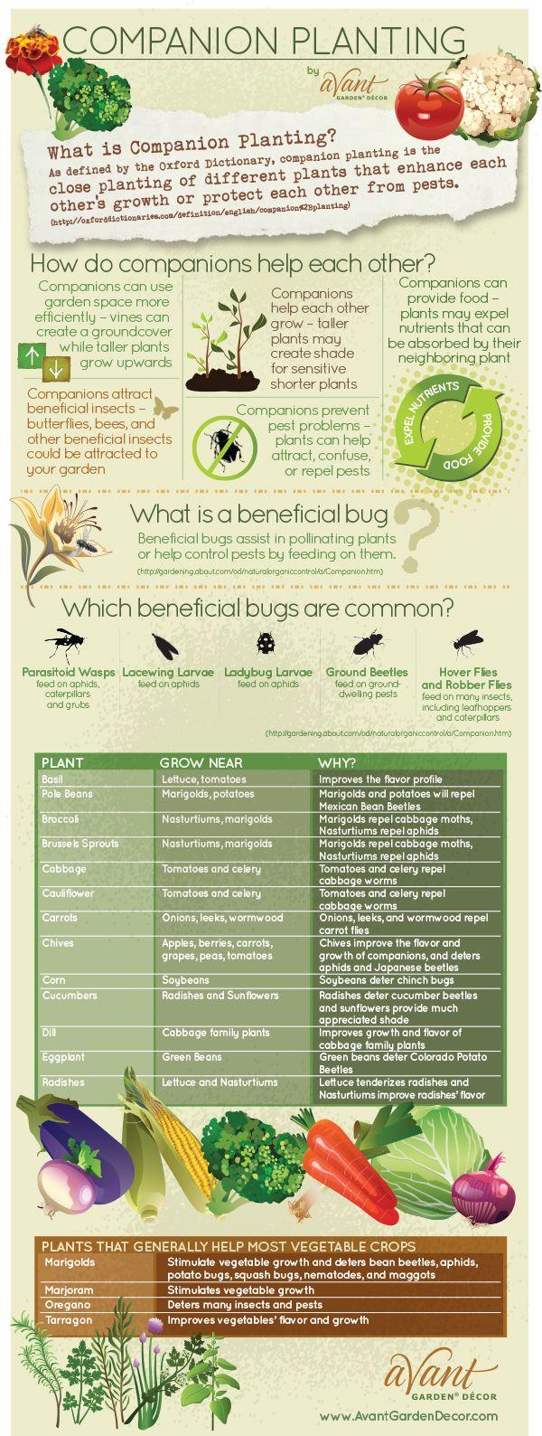 Companion Planting #infographic