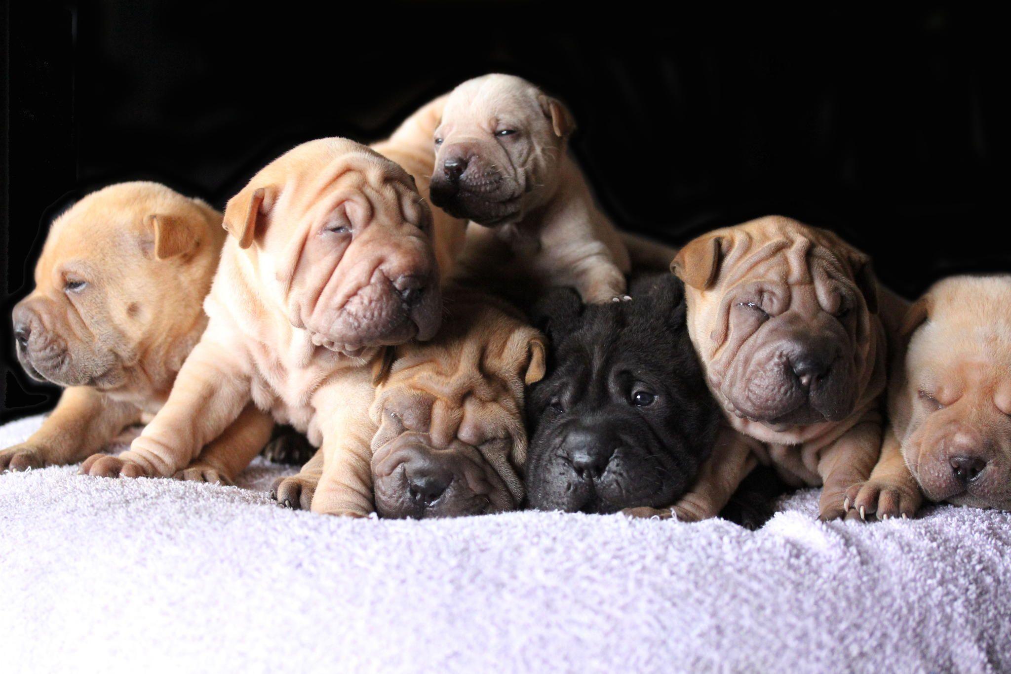 Puppies to go! Puppies to go! Puppies, Pet