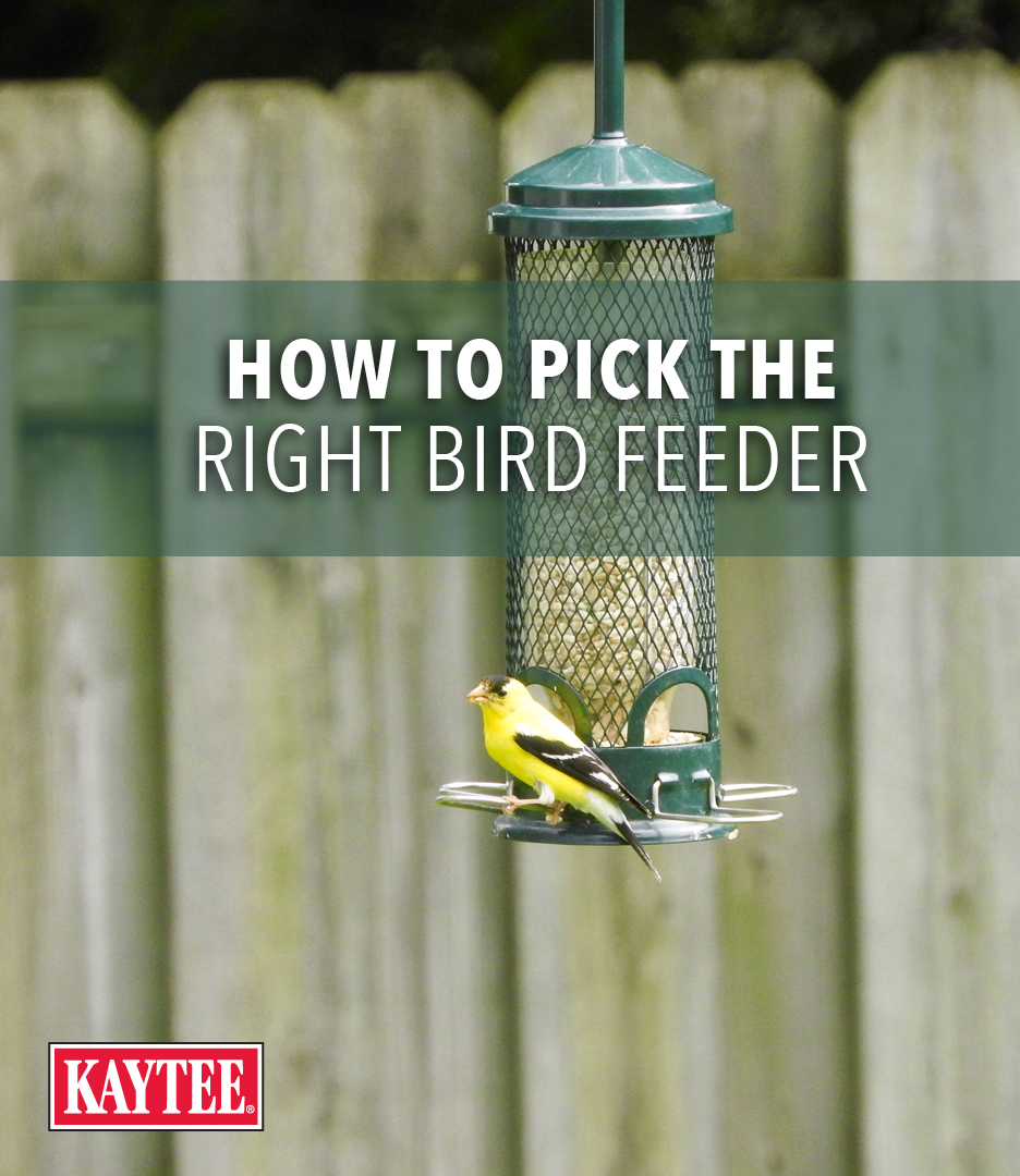 The Right Feeder Will Help You Attract The Birds You Want