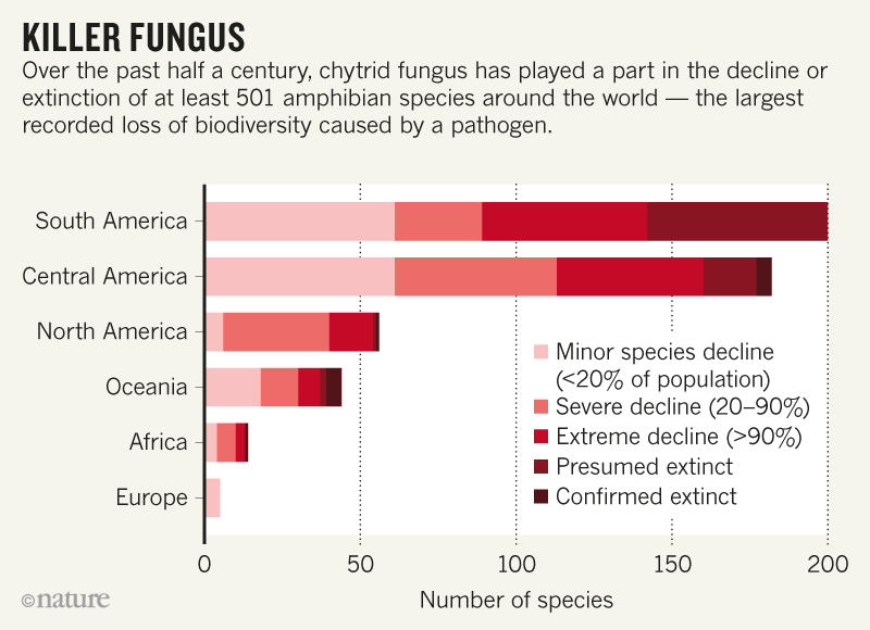 Skineating fungus is mighty species slayer Fungi
