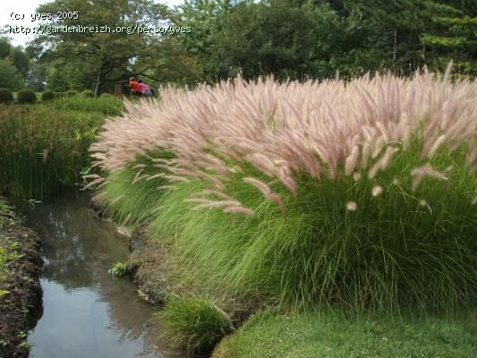 Jardins de gramin es recherche google gardens ornamental grasses pinterest gramin es - Jardin de graminees ...