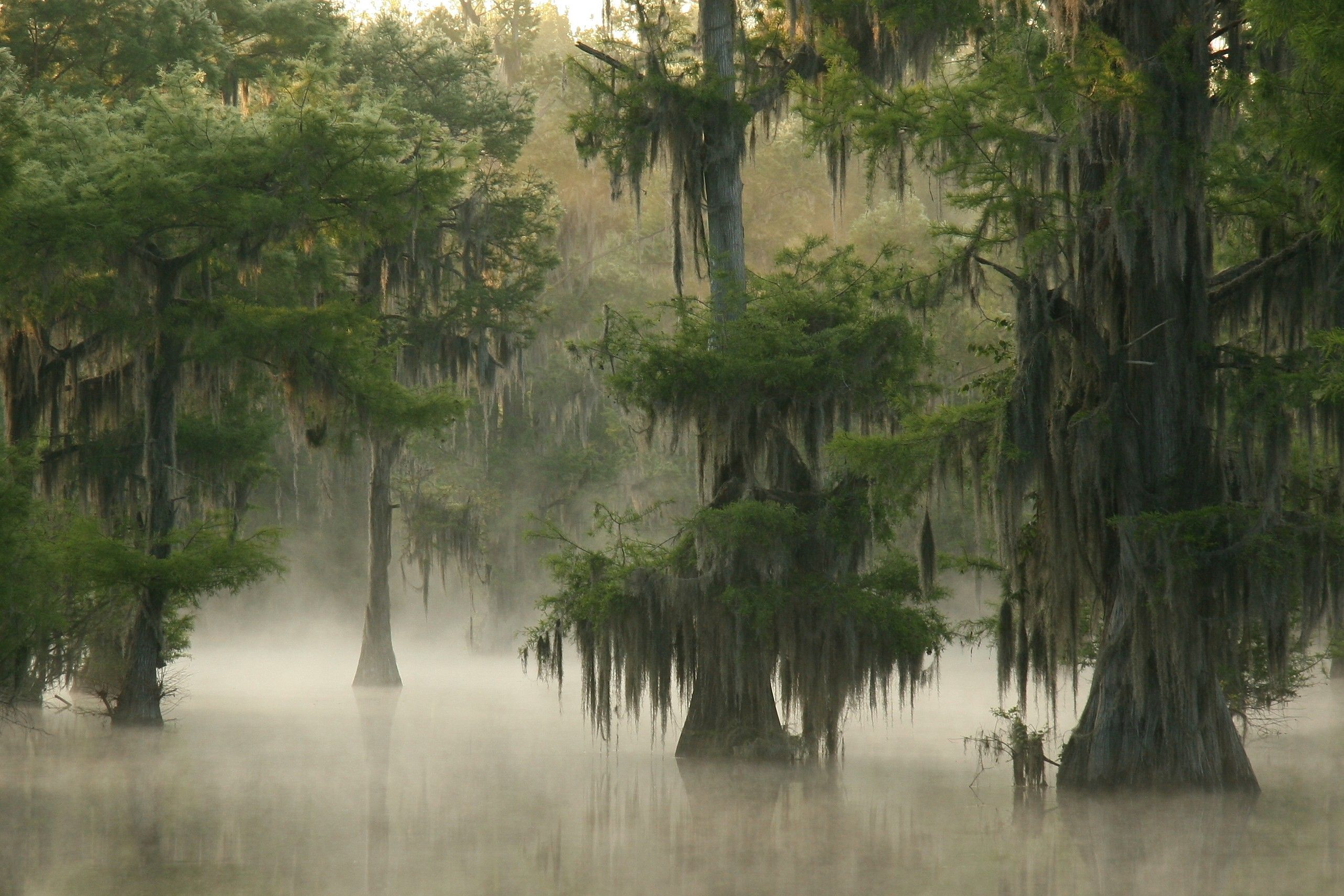 Image result for louisiana nature