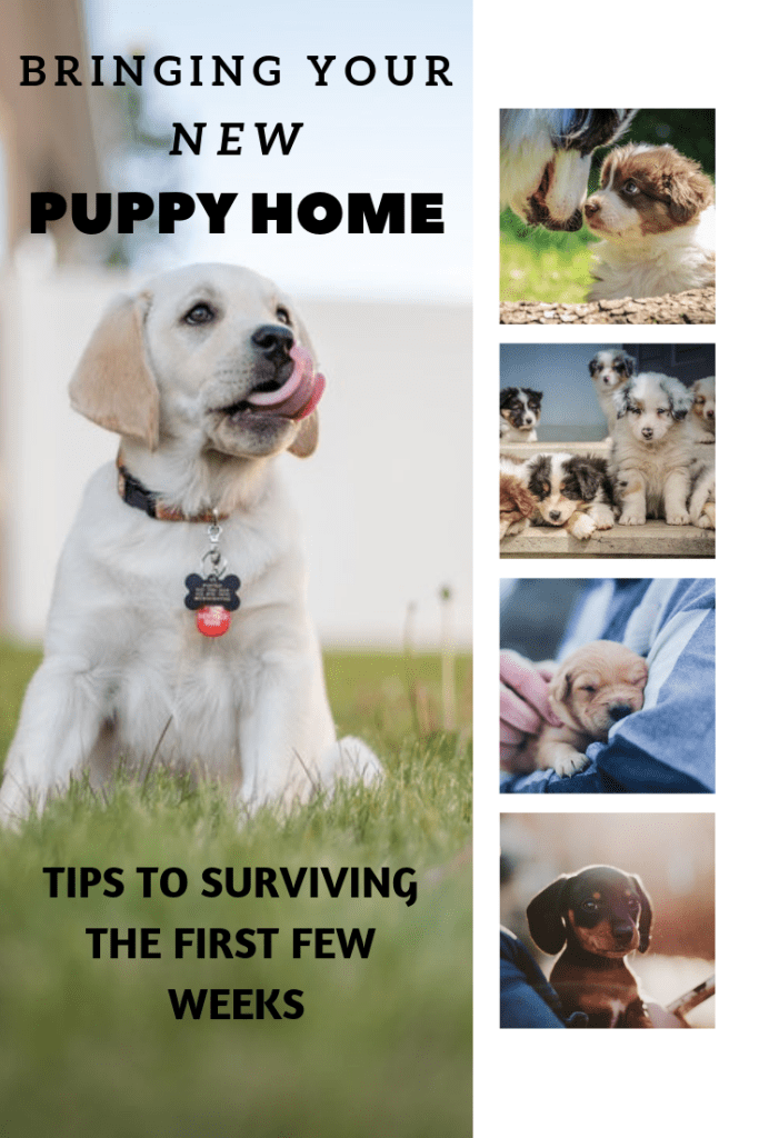 Bringing ​Your New Puppy Home - The First 48 Hours - Wag The Pup