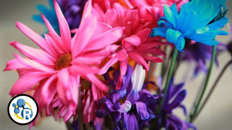 Make Fresh Flowers Last Longer With These Six Steps Flowers Last Longer Flower Delivery Flower Making