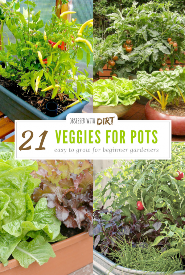 Indoor Vegetable Gardening Organic Vegetable Garden Container Gardening Ve Organic Vegetable Garden Indoor Vegetable Gardening Vegetable Garden For Beginners