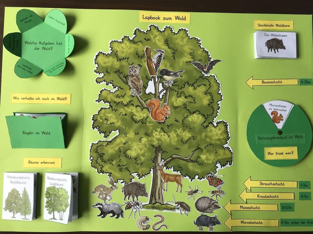 Unser Erstes Eigenes Lapbook Zum Thema Wald Komplett