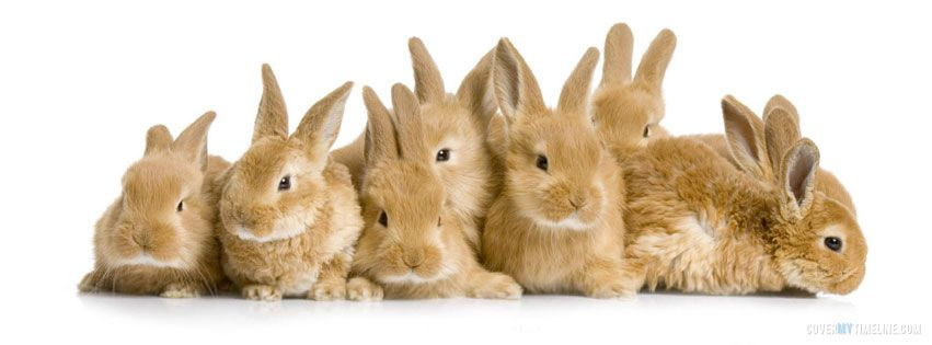 Easter Lots Of Bunny Rabbits On Http Www Covermytimeline Com Bayi Hewan Hewan Kelinci