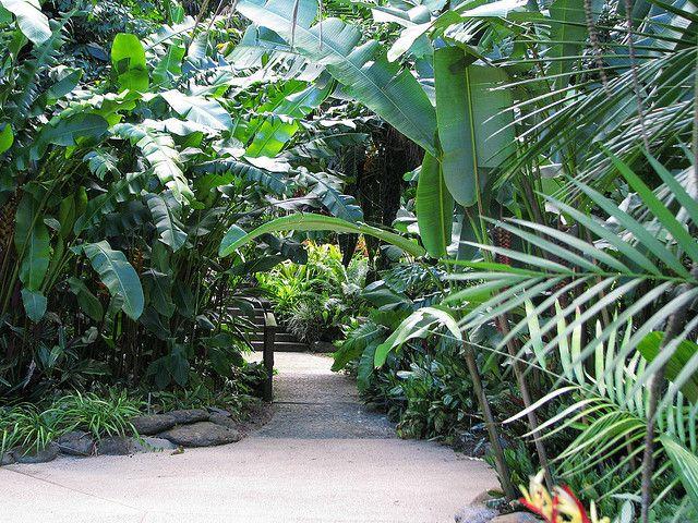 Tropical Landscaping Cairns Botanic Garden Tropical Landscaping Tropical Garden Tropical Garden Design