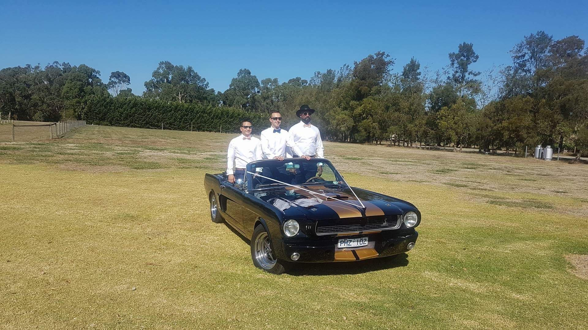 Mustangs In Black 1966 Shelby Convertible Ford Mustang At Mandala Wines And Restaurant The Yarra Valley For Ned Natalie S Wedding