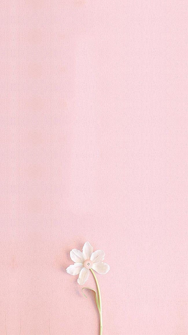 Pink Fresh H5 Background Art Flower Phone Wallpaper Pink Wallpaper Iphone Pink Background
