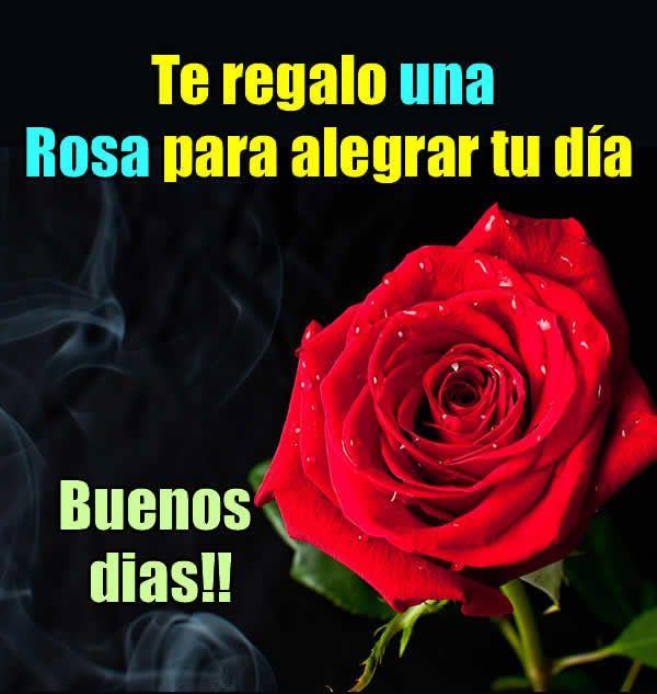 Frases De Rosas Y Amor Musica Hoy Musica Romantica Frases Con