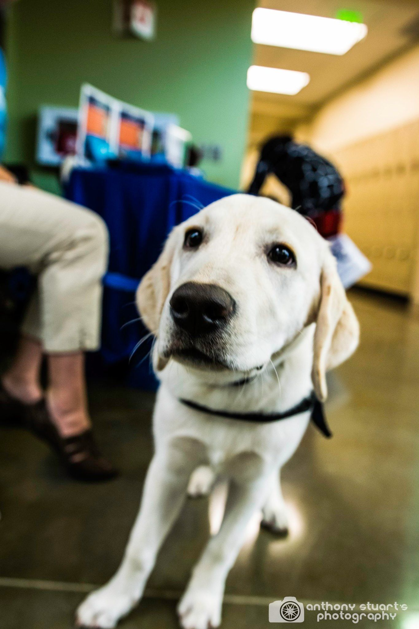 The SPCollege Veterinary Technology Center celebrated its