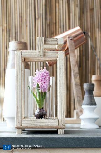 la jacinthe a chaque mois sa plante d cembre jacinthe pinterest jacinthe and d cembre. Black Bedroom Furniture Sets. Home Design Ideas