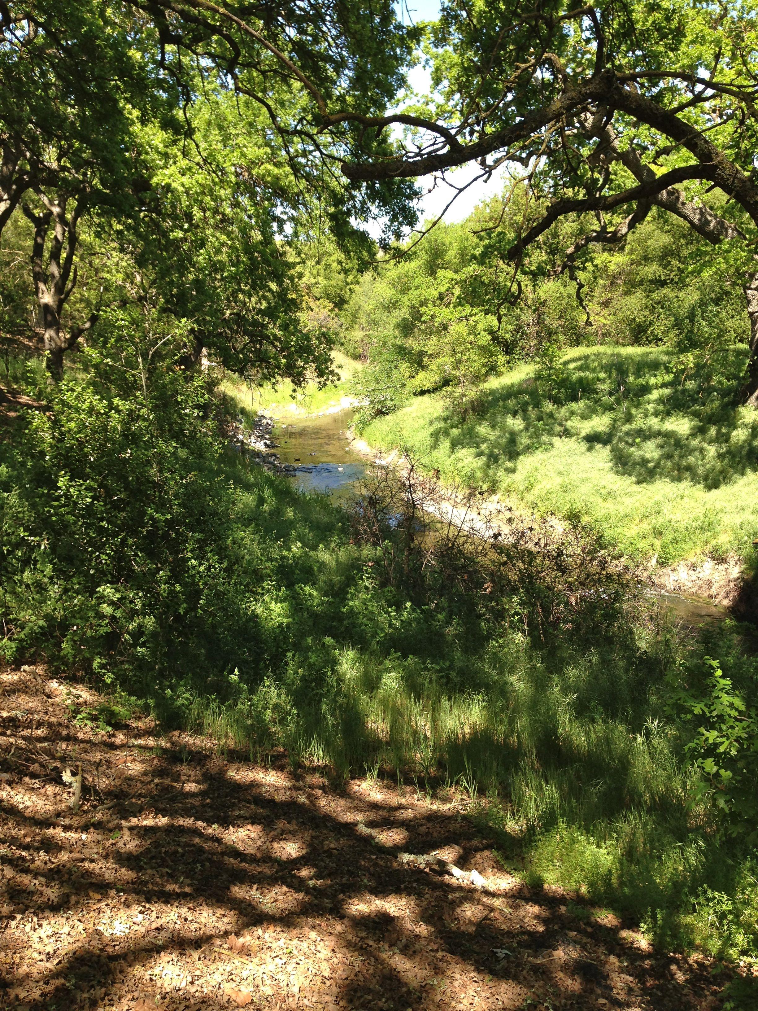 Wonderfully Quiet Stream, Birds Sing, gods peaceful creation...