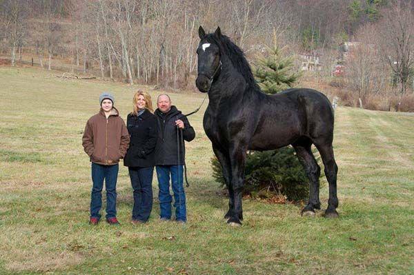 Este enorme cavalo Percheron é recordista mundial em tamanho