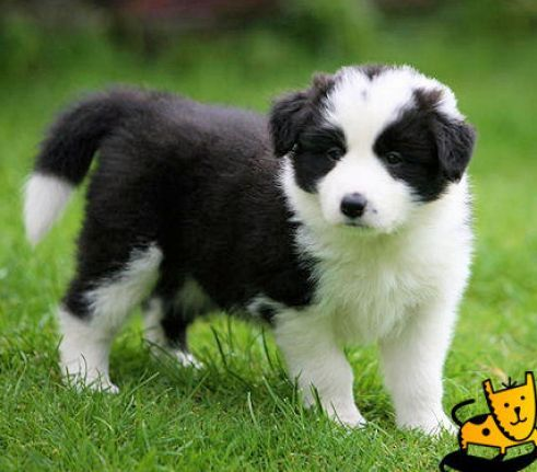 Cute Dogs And Puppies Really Cute Dogs And Puppies Pictures 2